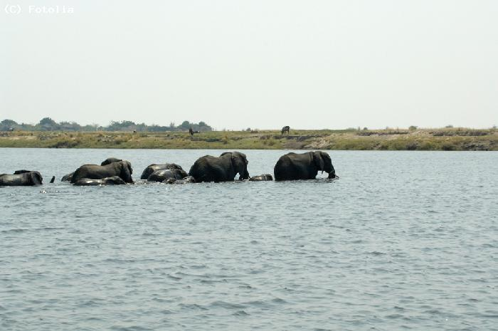 Elephants - Nigeria