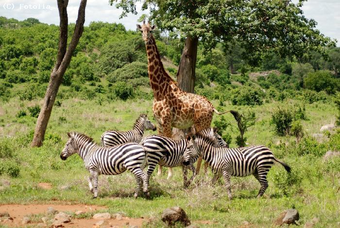 Namibie - Guide de voyage Namibie - Voyageurs du Monde