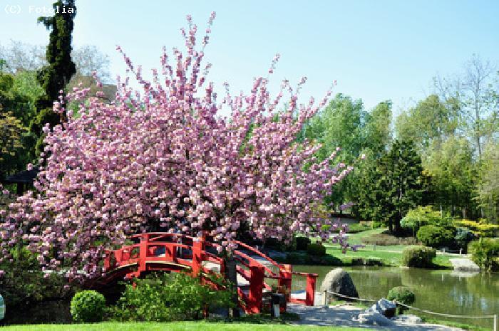 Guide au japon guide touristique pour visiter le japon for Jardin japonais 78