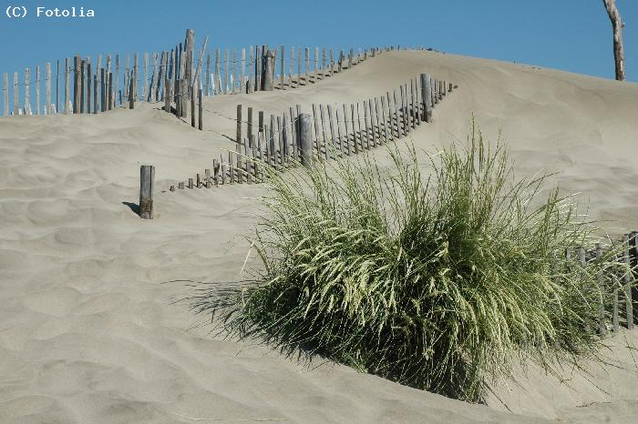 Dunes - Soulac