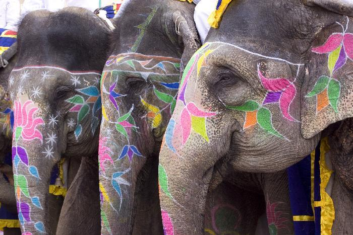 Elephants pour une ceremonie - HYDERABAD