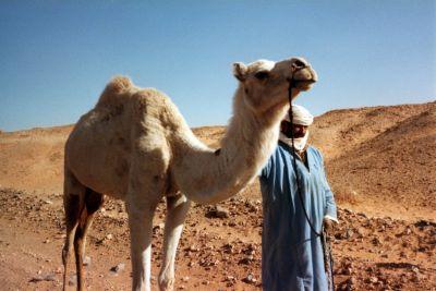 vole algérie pas chère