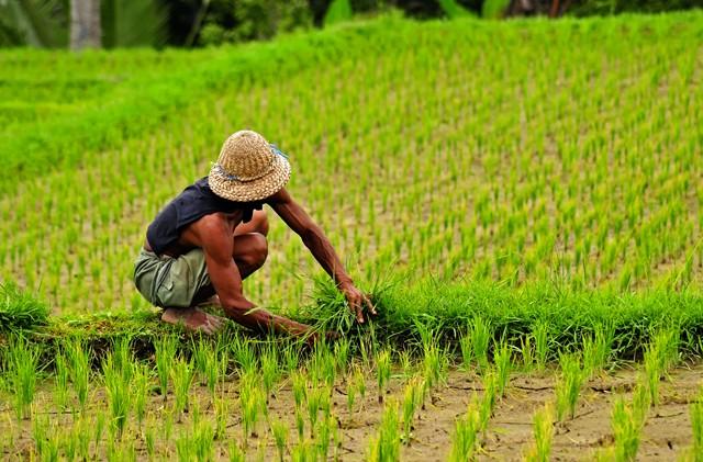 Splendeurs Bali Extension