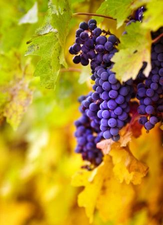 Route Vins