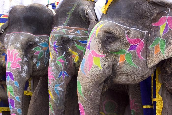 Elephants lors d'une fete traditionnelle - New Delhi