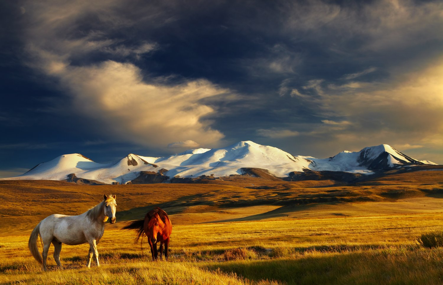 photo-de-mongolie