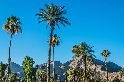 Location voiture Palm Springs